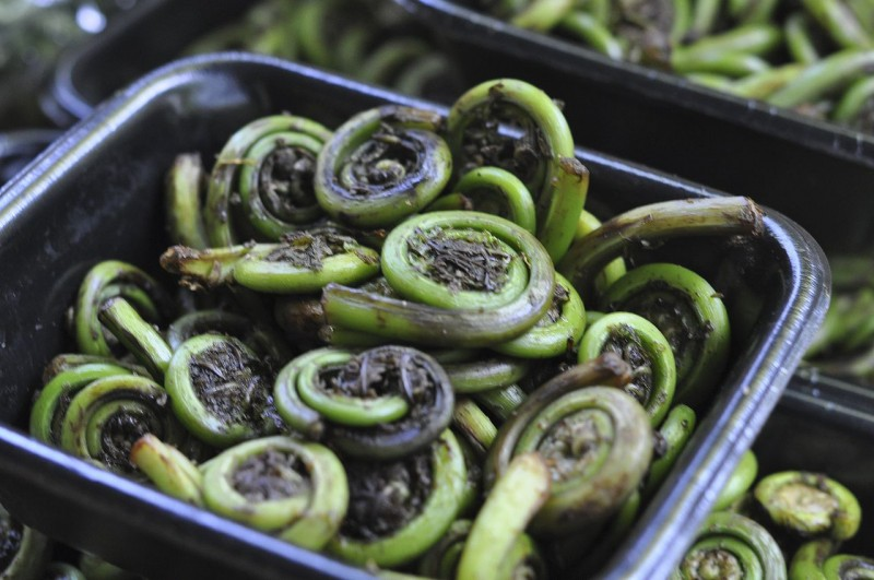 Fiddlehead Ferns Savor Culinary Services Prepared Meal Delivery